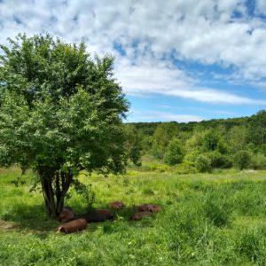 Climbing Tree Farm
