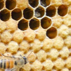 Fahey Family Honey Farm